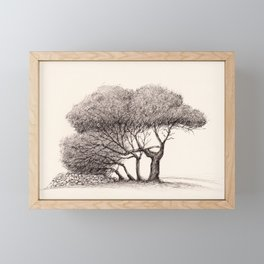 Pine Trees on a Country Road, Malta Framed Mini Art Print