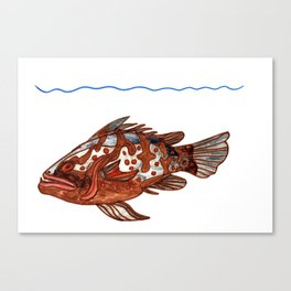 Goliath Grouper Canvas Print