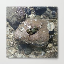 Mr Crab Metal Print