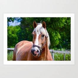 Equine Beauty Art Print