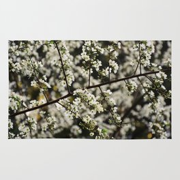 Early Spring White Blossoms Rug