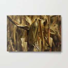 Corn anyone? Metal Print