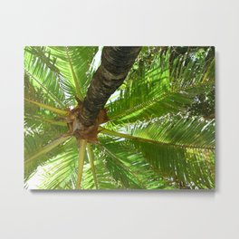 Coconutty Metal Print