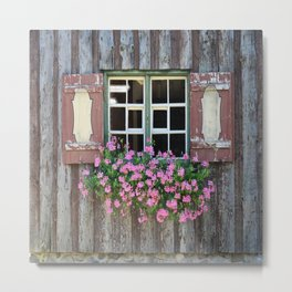 Good Morning Geraniums! Metal Print