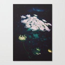 Anne's Lace Canvas Print