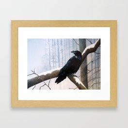 Winter Messenger Framed Art Print