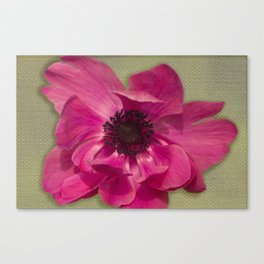 Pink Anemone on Linen Texture Canvas Print