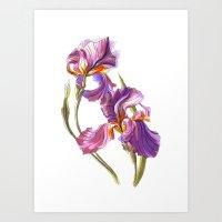 Irise Art Print