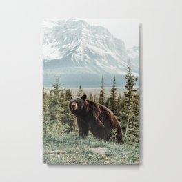 Bear Bear Metal Print