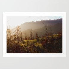Wilding Pine Art Print