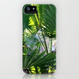 SDRV   Mexican Fan Palm iPhone Case