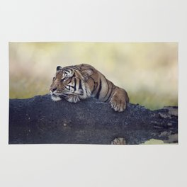 Bengal tiger resting on a rock near pond Rug