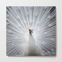 Peacock20160401 Metal Print