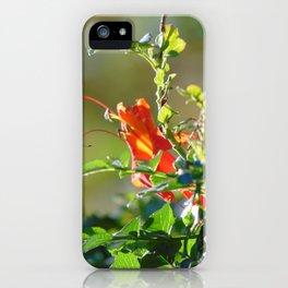 Morning Sunlight iPhone Case