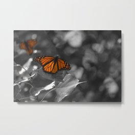 Monarch Butterfly Perched on Leaf near Lake Michigan Metal Print