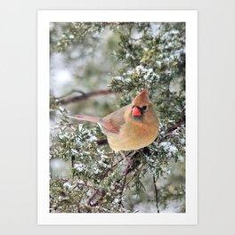 Frosty Female Cardinal Art Print