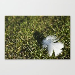 Feather on Green II Canvas Print