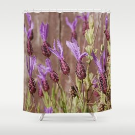 French Lavender (Lavandula stoechas) Shower Curtain