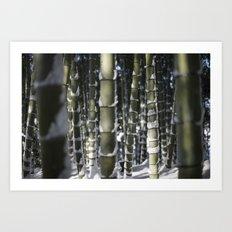Kyoto Winter 2015 II (bamboo)  Art Print