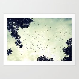 Flock of birds at sunset Art Print
