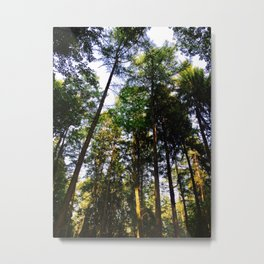 Closer To The Sky Photography Metal Print