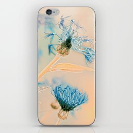 Cornflowers iPhone Skin