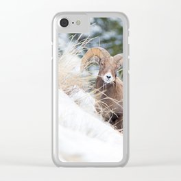 Bighorn Sheep Clear iPhone Case