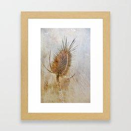Textured Wild Teasel Framed Art Print
