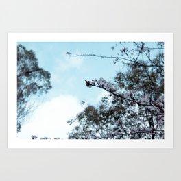 sakura blossom on the sky Art Print