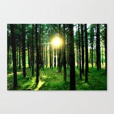 Secret Forest Canvas Print