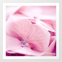 Sweetness of pink Art Print