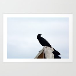 Bird collection _03 Art Print