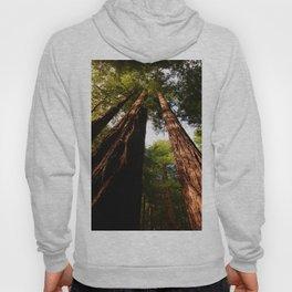 Redwood Tree Tops Hoody