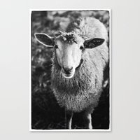 sheep Canvas Prints featuring Sheep by SilverSatellite