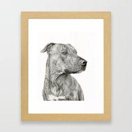 Ittie Bittie Pittie Framed Art Print