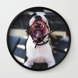 Boston Terrier or Sea Lion? Wall Clock