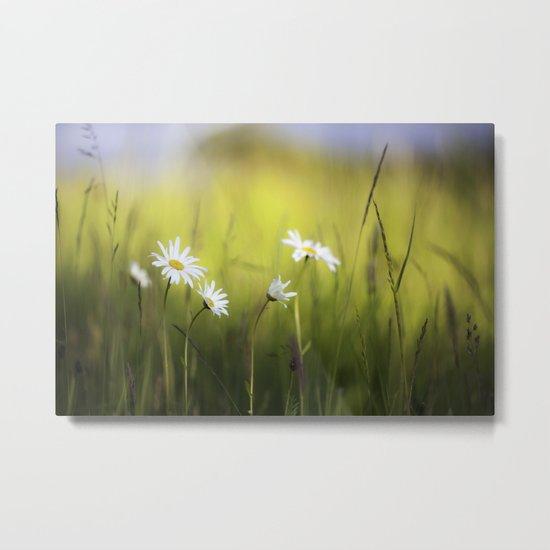 Daisy Landscape Metal Print