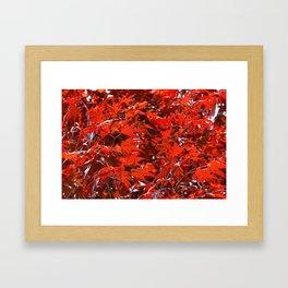 Japanese Red Maple Leaves Framed Art Print