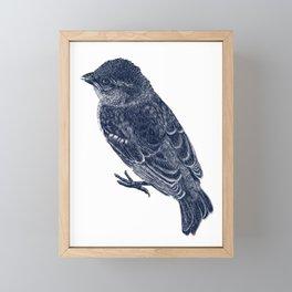 Sparrow Framed Mini Art Print