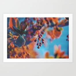Golden Hour Shrub V Art Print