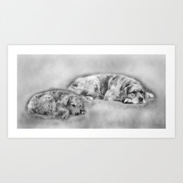 Golden Retriever young and old Art Print