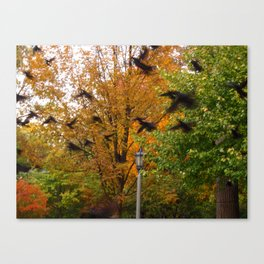 Black Wings Canvas Print