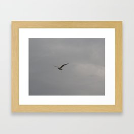 Seagull Flying through a Grey Sky Framed Art Print