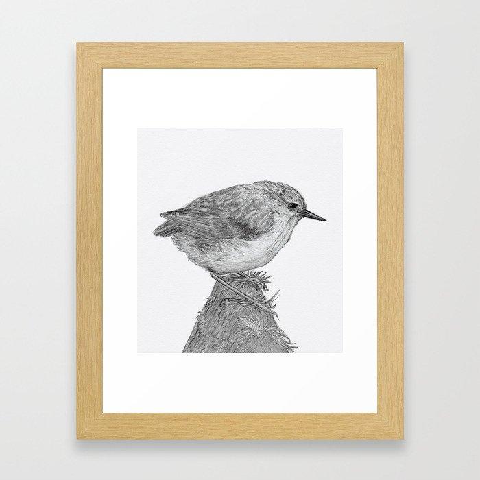 Rifleman - New Zealand Native Bird Framed Art Print