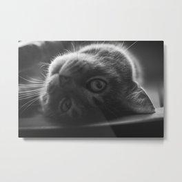 Upside Down Cat Metal Print