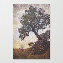 Olden Tree Canvas Print