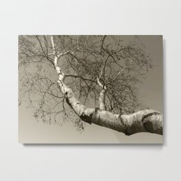 Birch tree #01 Metal Print