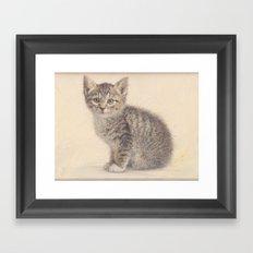 Gray kitty  Framed Art Print