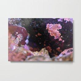 Tiny Anenome and Pretty Rocks Metal Print