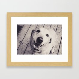The Perfect Lab Framed Art Print